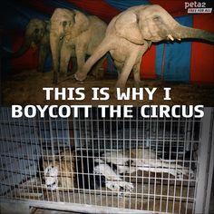 Animals do NOT belong in the #circus! #BoycottTheCircus