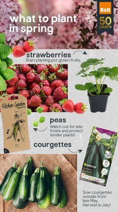 Not sure when to plant? Our handy planting calendar will guide you on what to plant and when, for truly terrific results. May Garden, Spring Garden, Herb Garden, Vegetable Garden, Garden Plants, Indoor Plants, Growing Vegetables, Growing Plants, Trimming Hedges