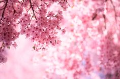 Paint the sky Cherry Blossom #valentines #sweetlove #adore #sayitwithflowers #aromatherapy