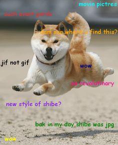 [Image - 32391] | WHARRGARBL / Sprinkler Dog | Know Your Meme |Flying Dog Meme