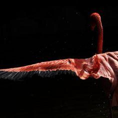 flamingo .../ by tashi delek