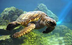 animales   Fotos : animales acuaticos