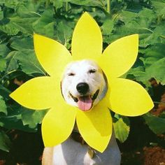 Meet Gluta The Happy Rescue Dog Whose Bright Face Will Make You - Meet gluta the smiling dog that beat cancer