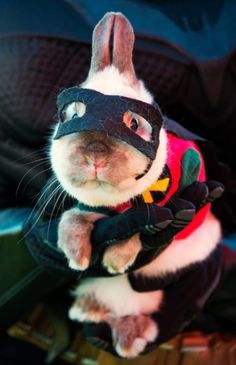 21 Pet Halloween Costumes So Cute You'll Cry - Robin From Batman - Get more costume ideas for your pet at Redbookmag.com.