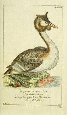 Bd.3 (1782) [Plates] - Gemeinnüzzige Naturgeschichte des Thierreichs : - Biodiversity Heritage Library