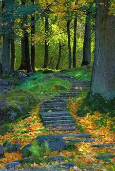 Forest Path, Ukraine - I love pathways Foto Nature, All Nature, Forest Path, Forest Scenery, Walk In The Woods, Jolie Photo, Pathways, Beautiful Landscapes, The Great Outdoors