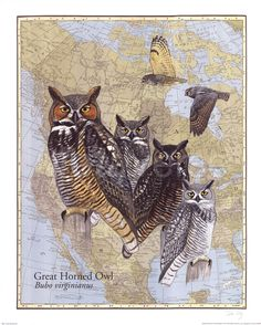 Get inspired by our high quality Owl Framed Art. At FramedArt you will find some of the best prices and a large selection of Framed Owl Art with a Return Policy. Owl Wall Art, Art For Sale Online, Bird Book, Great Horned Owl, Owl Print, Wildlife Art, Bird Art, Animal Drawings, Illustration Art