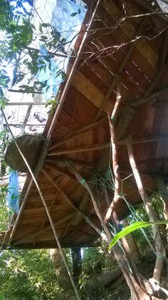 la casa del arbol desde abajo- from under the tree house