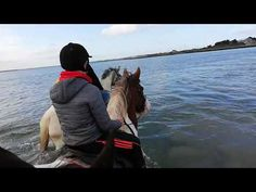 November Sierra and Blue Joey went hunting yesterday, so as is tradition, the next day they get to ride in the ocean. Wonderful therapy for them. Beach Rides, Learn A New Skill, Show Jumping, Cob, The Locals, Over The Years, Hunting, Sunday, Swimming