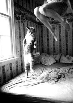 """No pulo do gato"""