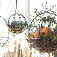 Hand-forged in California especially for terrain, these solid steel hanging baskets are designed with an extra-deep planting area so soil and plants won't dry out. Perfect for lining with moss and han Container Plants, Container Gardening, Vegetable Gardening, Flower Gardening, Greenhouse Gardening, Container Flowers, Winter Greenhouse, Kitchen Gardening, Indoor Gardening