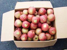 Apple sur la pomme