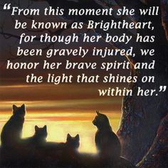 """""""From this moment she will be known as for though her body has been gravely injured, we honor her brave spirit and the light that shines on within her,"""" - (That was re-naming ceremony, right? Warrior Cats Quotes, Warrior Cats Books, Warrior Cats Fan Art, Warrior 3, Cat Quotes, The Warriors Book, Love Warriors, Three Cats, Cat Boarding"""