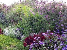 I love the country garden look with 'Blue Bouquet' ageratum leaning toward a dark leaved heuchera, grass is a pennisetum which is just beginning to bloom.