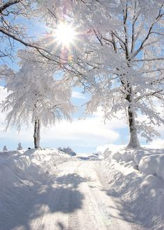 nature-planet: Snowy sunburst vertical | tina_bonner_photography