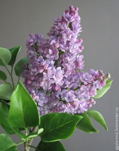 Flowers handmade. Livemaster - handmade. Buy Lilac'Marshal Vasilevskiy'.Polymer flowers.Lilac, a gift for the new year