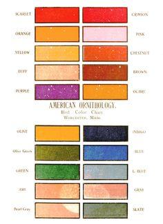 American Ornithology Chart, 1901