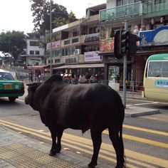 """it's thinking...""""when can I cross?"""", haha...@sai kung, Hong Kong"""