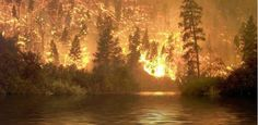 Robots could eventually help prevent forest fires.