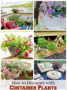How to decorate with Container Plants - Four Generations One Roof