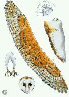 Print and put together flying owl for Harry Potter party.