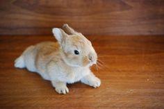 bunny awwwww