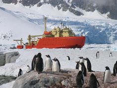 Penguins Watch NSF Research Ship