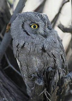 Owl Pictures, Owl Pics, Winning Lottery Numbers, Screech Owl, Birds Of Prey, Musketeers, Brave, Random, Party