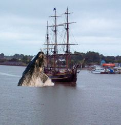 My first photo editing effort.  The ship is the HMS Bounty II, leaving Bay City, Michigan following the 2010 Tall Ships Festival (My photo).  The 'whale' is a shot from wikipedia commons media.  The idea came to me when a sailboat about the same time had been crushed by a whale.
