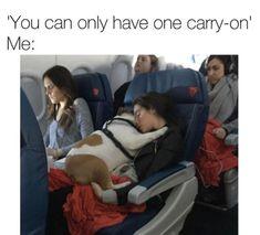 14 Funny English Bulldog Memes of the Day! Animal Memes, Funny Animals, Cute Animals, I Love Dogs, Puppy Love, Cute Puppies, Cute Dogs, Funny Cute, Hilarious