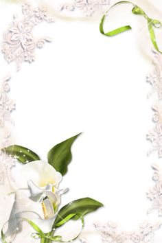 Transparent Calla Lily PNG Photo Frame