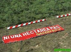 Greenpeace manifestando en Santa Fe la no mas deforestacion