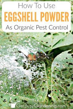 Organic Gardening, Gardening Tips, Container Gardening, Gardening Supplies, Organic Compost, Kitchen Gardening, Gardening Magazines, Gardening Courses, Gardening Quotes