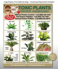 TLC Safety By Design Toxic House Plants Poison for Pets Dogs Cats Emergency ICE Home Alone Refrigerator Magnet Size x Pet friendly plants and toxic plants to pets – Artofit 10 Purifying Houseplants that are Safe for Cats and Dogs The Best Low-Maintenanc Toxic Plants For Cats, Cat Plants, Garden Plants, Cat Safe House Plants, Veg Garden, Plants Safe For Dogs, Plants That Repel Spiders, Houseplants Safe For Cats, Backyard Plants