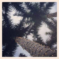 Festive nights at the Captiva Beach Resort. Sarasota, FL