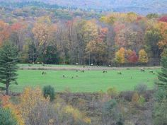 Elk County, PA in the fall....looks a lot like Tionesta where Gram/paps cabin was!!