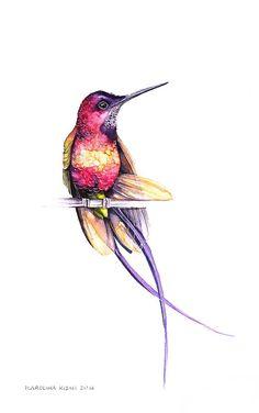 43 Super Ideas Humming Bird Sketch Hummingbird Drawing - Image 20 of 20 Hummingbird Drawing, Watercolor Hummingbird, Hummingbird Tattoo, Watercolor Bird, Watercolor Animals, Watercolor Paintings, Watercolor Landscape, Watercolor Techniques, Watercolor Background