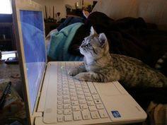 """""""Hm.. ia să mai postez câteva pozele pe Pisicile au cucerit Internetul"""""""