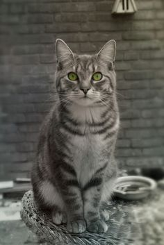 Little kittens are getting big! #GijsTommieSam #kitten #cats #animals