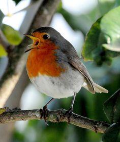 What a pretty plump birdie