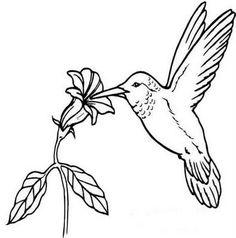 risco para pintura em tecido pano de prato beija flor