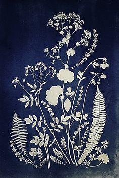 Kunst Inspo, Art Inspo, Art And Illustration, Botanical Drawings, Botanical Prints, Pochette Cd, Sun Prints, Cyanotype, Silk Screen Printing