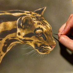 Detail of a new clouded leopard  Watercolor on board 9in x 12in Rebecca Latham  #wildlife #wildlifeart #watercolor #cloudedleopard #leopard #cat #artoftheday #art #artist #painting #workinprogress #miniatureart #miniature #realism #naturalism