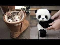 Cute baby animals Videos Compilation cute moment of the animals - Cutest Animals Funny Cute Cats, Cute Kittens, Funny Cats And Dogs, Cute Kitten Gif, Super Cute Animals, Cute Baby Animals, Cutest Animals, Cute Animal Illustration, Cute Animal Drawings