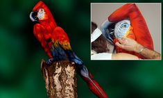 Who's a clever boy? Artist paints woman's entire body to make her look like a parrot