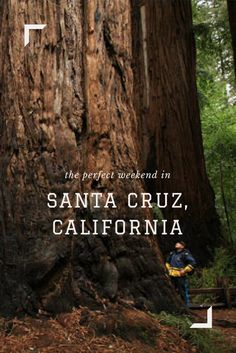 A perfect weekend near Santa Cruz: find the top things to do and places to stay. Northern California Travel, Santa Cruz California, Santa Cruz Mountains, Monterey Bay, Best Places To Eat, Bay Area, Things To Do, Road Trip, Adventure