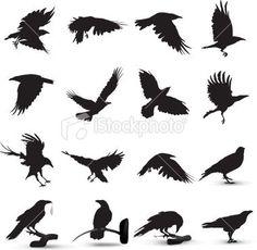 Raven Silhouette Royalty Free Stock Vector Art Illustration