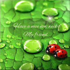New Week Quotes, My Friend, Feelings