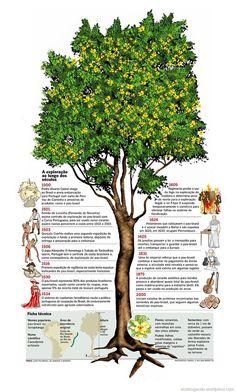 Pau-brasil. [Infographic, Farrel e William Mariotto] [Image source, livro 'Pau-brasil:da semente à madeira'].