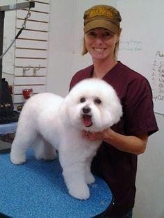 Pet Grooming Schools